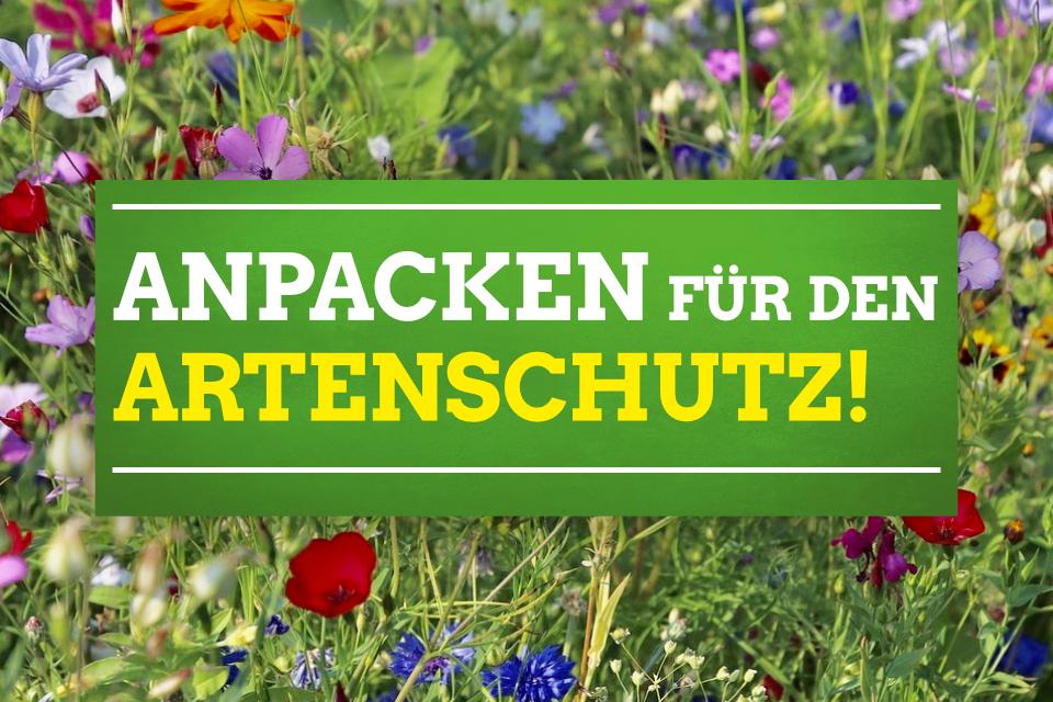 """Altrip: """"Anpacken für den Artenschutz"""" am 3. November 2018"""